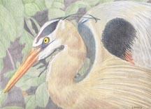 GB Heron
