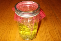 Lilibeth Andre, Mung Bean Sprouts-Soaking